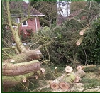 Avoid risk of injury let  A.S.Tree Services do the job for you